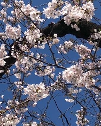 桜咲く_f0061394_09544098.jpg