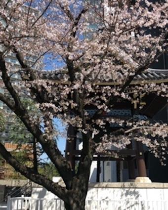桜咲く_f0061394_09553046.jpg