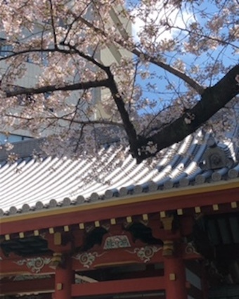 桜咲く_f0061394_09555394.jpg