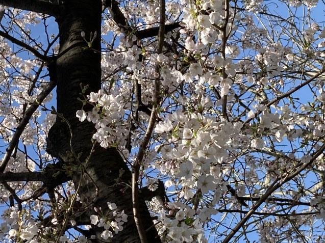 春ですね~ / koba_d0135801_17014180.jpg