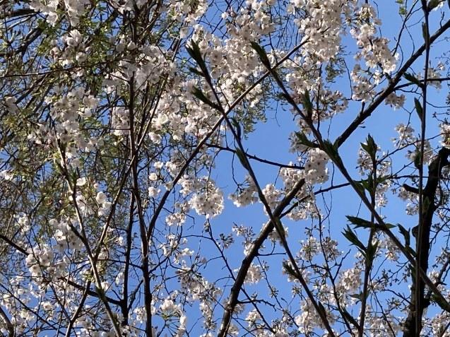 春ですね~ / koba_d0135801_17014592.jpg