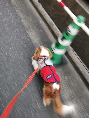 小さい犬に優しいチャコ_e0285305_16230894.jpg