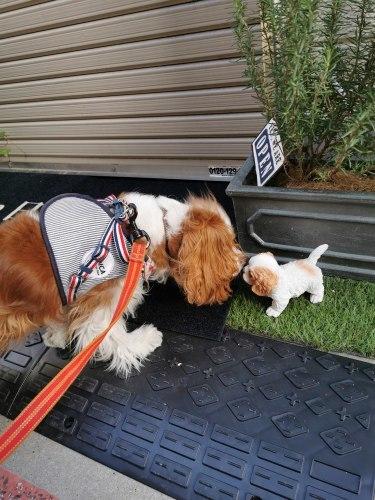 小さい犬に優しいチャコ_e0285305_16230966.jpg