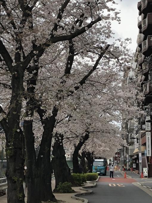 巣鴨の桜も満開🌸_f0140343_23145184.jpeg