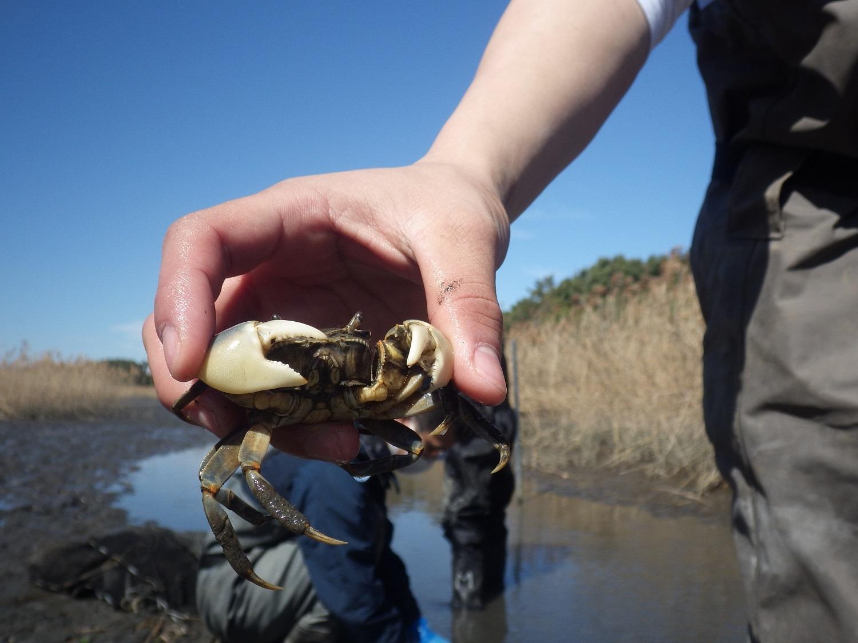 水生生物調査でアユの遡上を確認!(3月)_e0046474_13172176.jpg