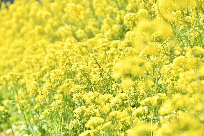 Spring has come_a0192475_09315185.jpg