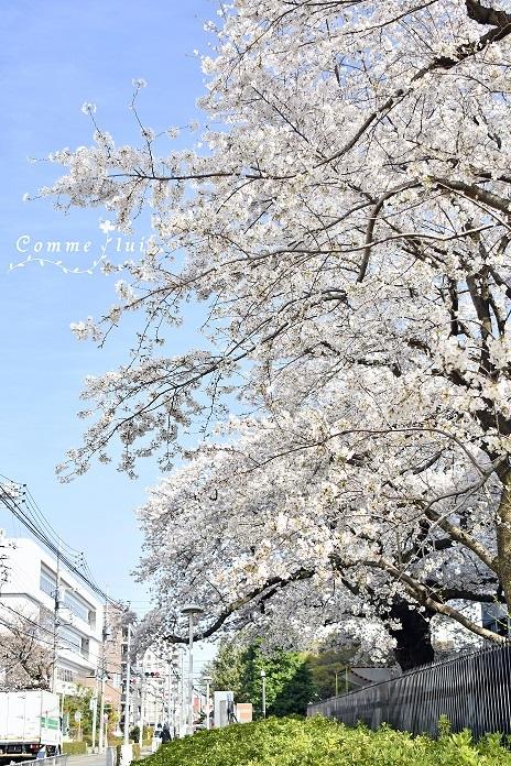 Spring has come_a0192475_09355062.jpg