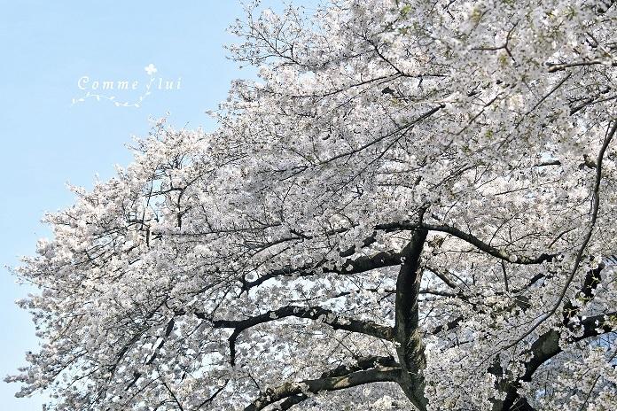 Spring has come_a0192475_09395660.jpg