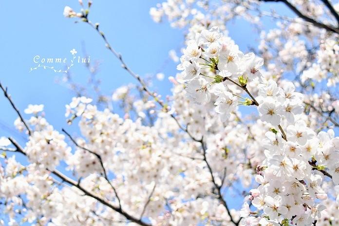 Spring has come_a0192475_09410435.jpg