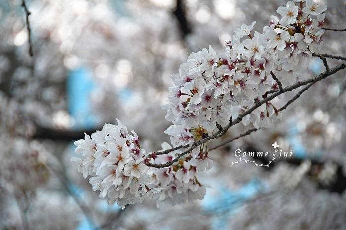Spring has come_a0192475_09412415.jpg