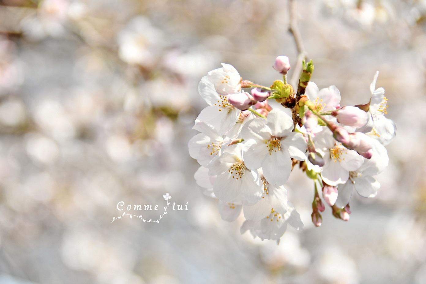 Spring has come_a0192475_09463398.jpg