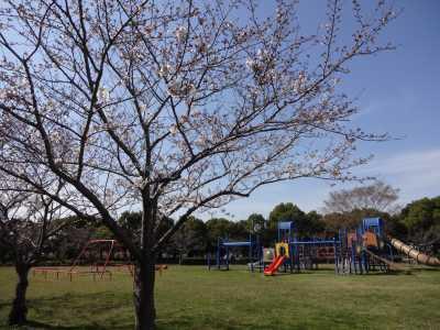 富浜緑地情報♪桜の開花、ユキヤナギの花、つくしが見られます!_d0338682_14581032.jpg