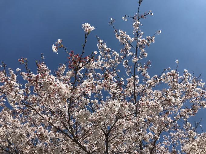私的ブログ…春が来た!…編^_^。_d0132688_18341275.jpg