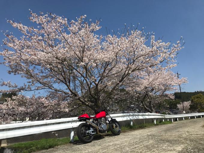 私的ブログ…春が来た!…編^_^。_d0132688_18341426.jpg