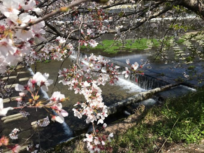 私的ブログ…春が来た!…編^_^。_d0132688_18341591.jpg