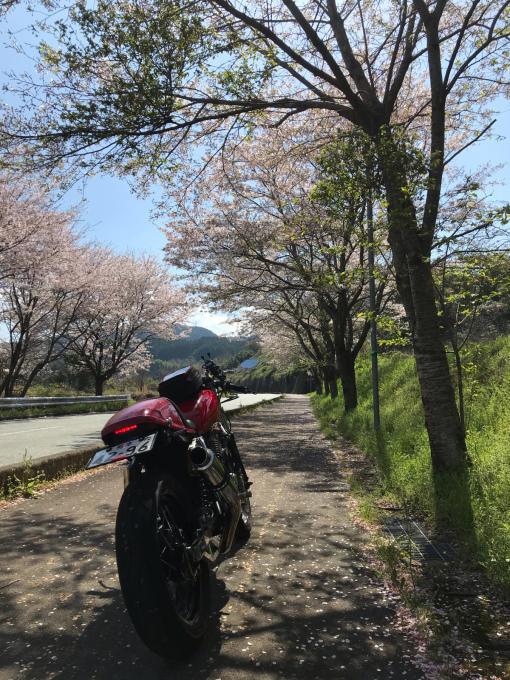 私的ブログ…春が来た!…編^_^。_d0132688_18350348.jpg