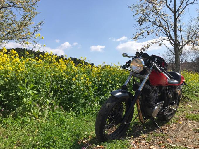 私的ブログ…春が来た!…編^_^。_d0132688_18361502.jpg