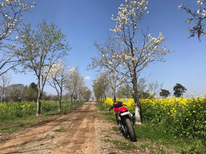 私的ブログ…春が来た!…編^_^。_d0132688_18361762.jpg