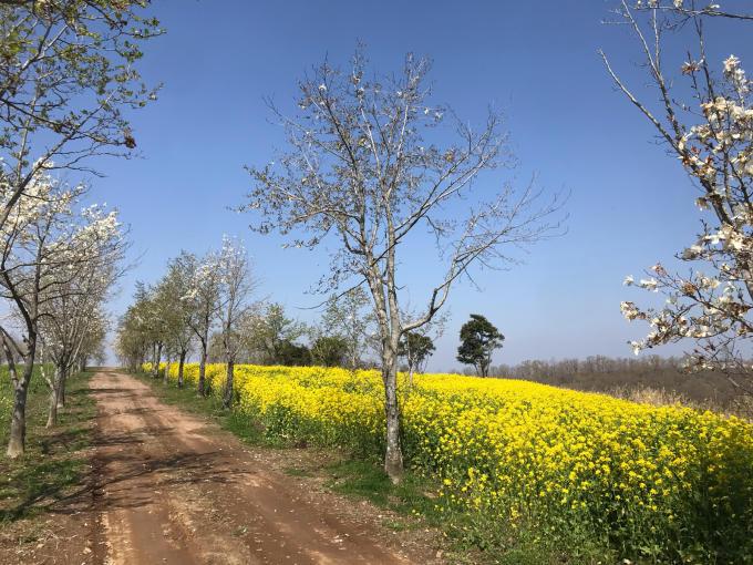 私的ブログ…春が来た!…編^_^。_d0132688_18361836.jpg