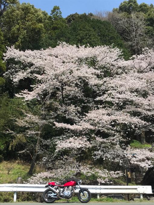 私的ブログ…春が来た!…編^_^。_d0132688_18373152.jpg