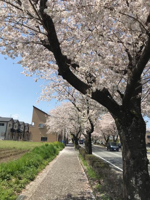 私的ブログ…春が来た!…編^_^。_d0132688_18390718.jpg