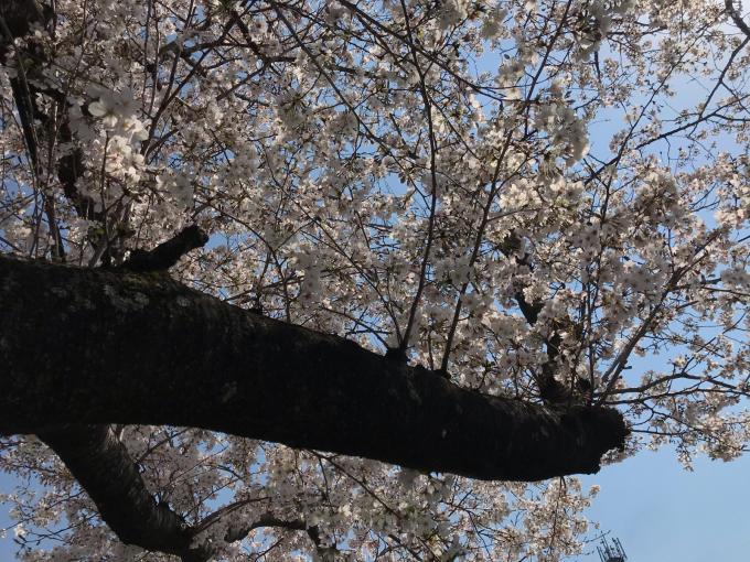 私的ブログ…春が来た!…編^_^。_d0132688_18391094.jpg