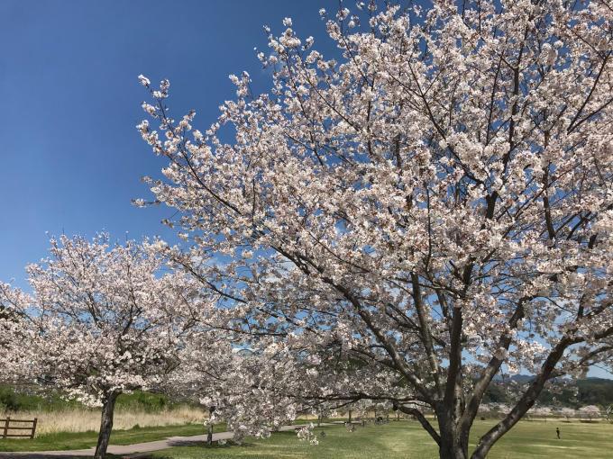 私的ブログ…春が来た!…編^_^。_d0132688_18431812.jpg
