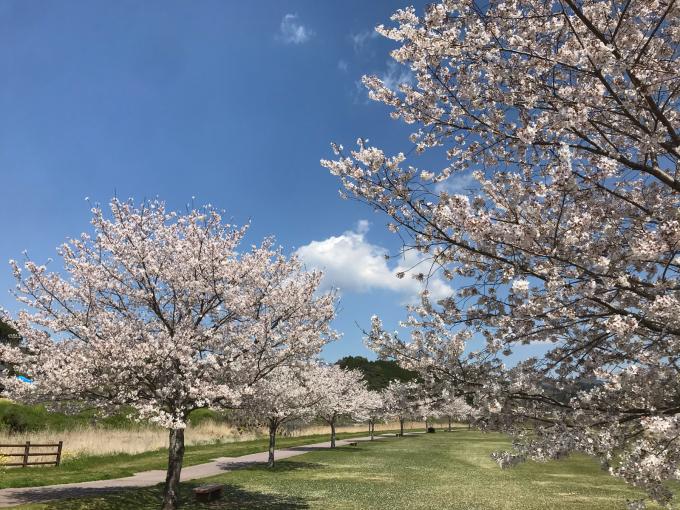 私的ブログ…春が来た!…編^_^。_d0132688_18431930.jpg