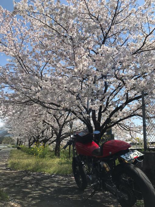 私的ブログ…春が来た!…編^_^。_d0132688_18453585.jpg