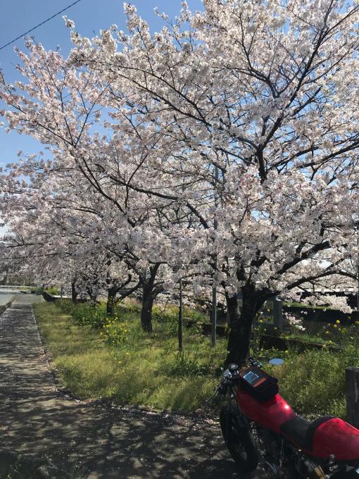 私的ブログ…春が来た!…編^_^。_d0132688_18453702.jpg