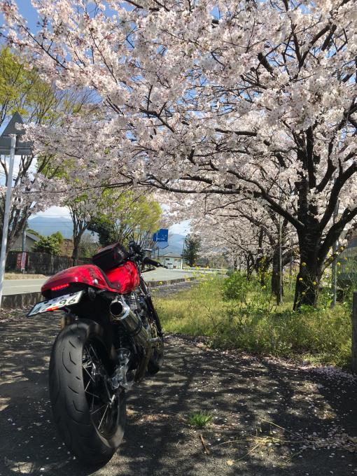 私的ブログ…春が来た!…編^_^。_d0132688_18453834.jpg