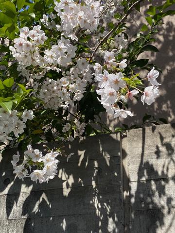 Voilà le printemps !_f0038600_13103133.jpeg