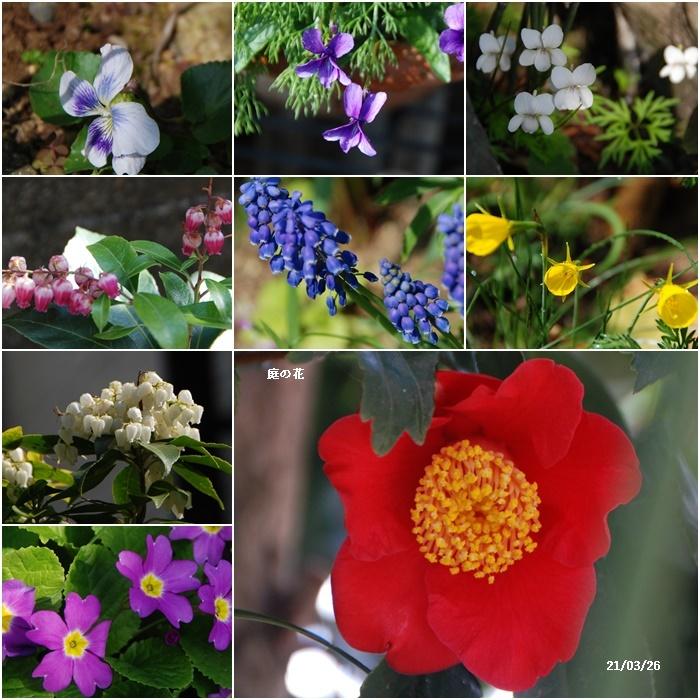 庭にも春が・・・、N叔母の事_c0051105_17535897.jpg