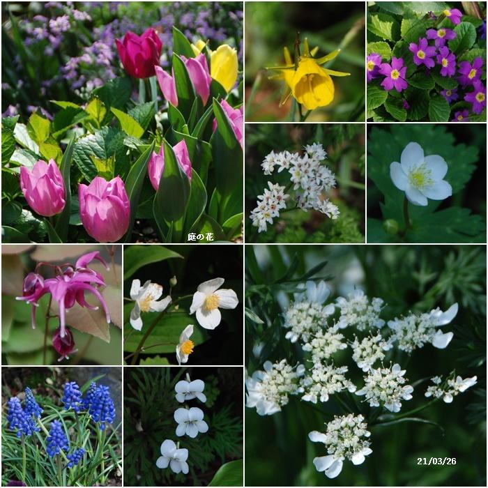 庭にも春が・・・、N叔母の事_c0051105_17551851.jpg