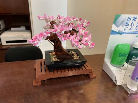 桜の季節_c0204724_17114393.jpeg
