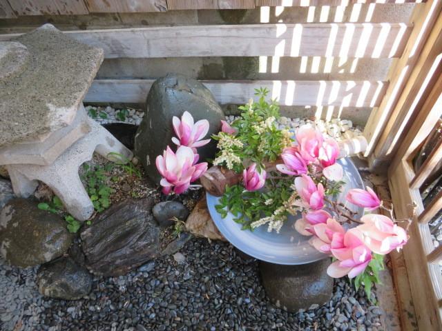 春を飾るモクレンと馬酔木(アセビ)を活ける_f0329849_21342179.jpg