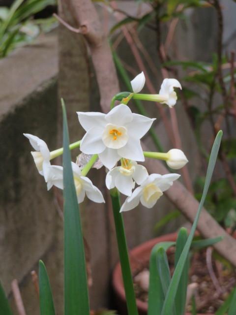 春を飾るモクレンと馬酔木(アセビ)を活ける_f0329849_22255416.jpg