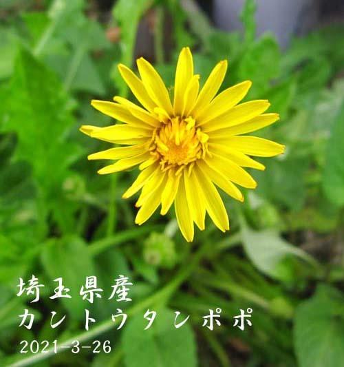 中国春蘭「天一荷」             No.2089_d0103457_23061930.jpg