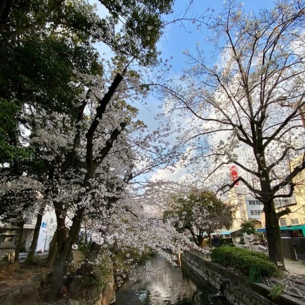ありがとう、桜_f0299682_21043700.jpg