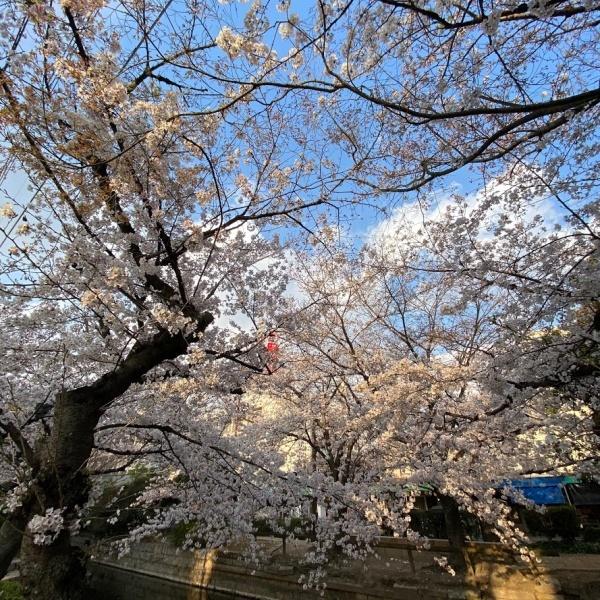 ありがとう、桜_f0299682_21045422.jpg