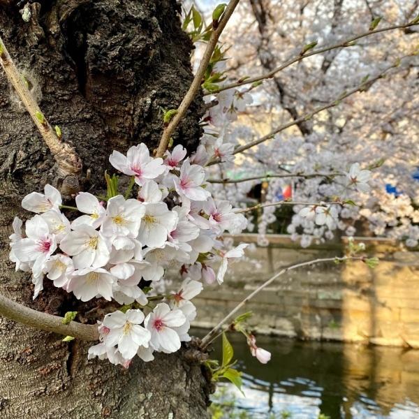 ありがとう、桜_f0299682_21050778.jpg