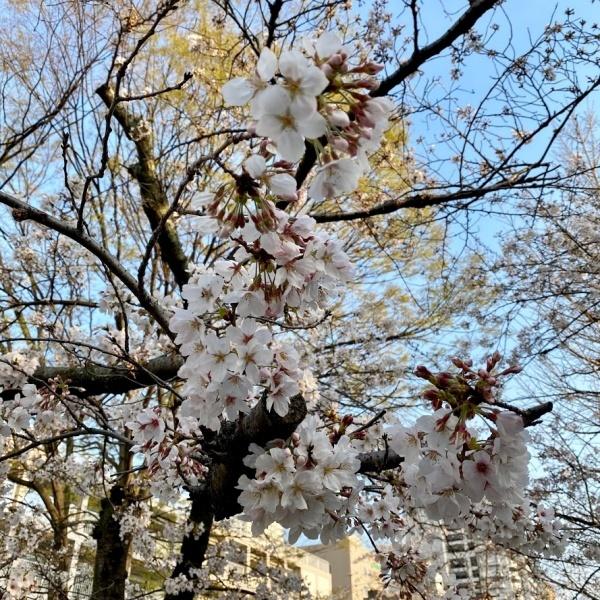 ありがとう、桜_f0299682_21054007.jpg