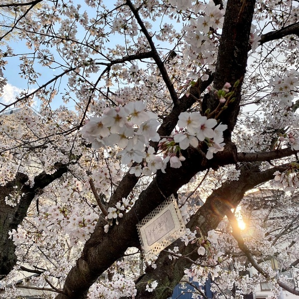 ありがとう、桜_f0299682_21060785.jpg