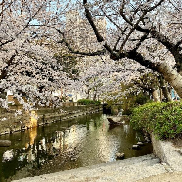 ありがとう、桜_f0299682_21062449.jpg