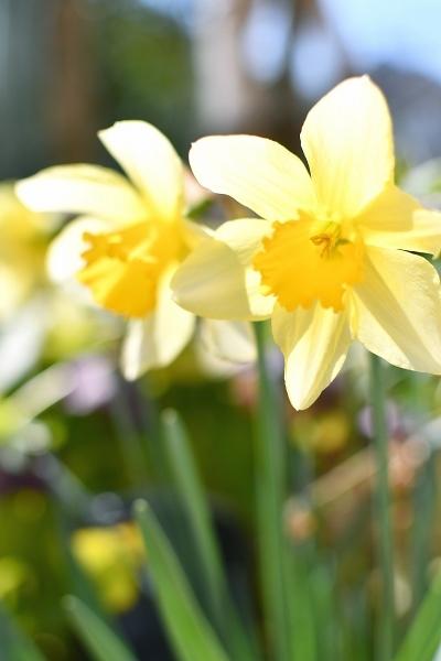 春の庭 2021 その後_d0025294_16141927.jpg
