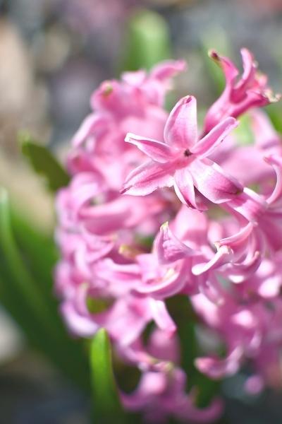 春の庭 2021 その後_d0025294_16145306.jpg