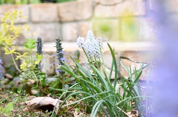 春の庭 2021 その後_d0025294_16152263.jpg