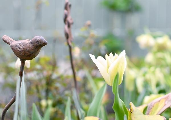 春の庭 2021 その後_d0025294_16154229.jpg