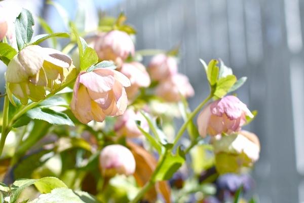 春の庭 2021 その後_d0025294_16163357.jpg