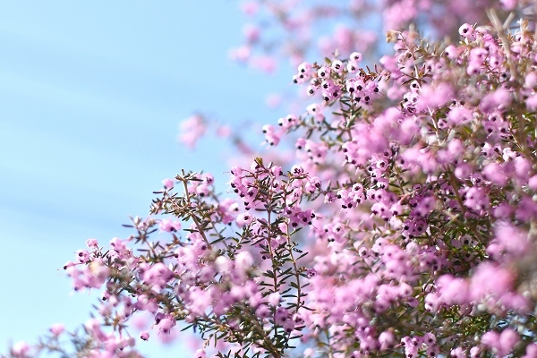 春の庭 2021 その後_d0025294_16165547.jpg